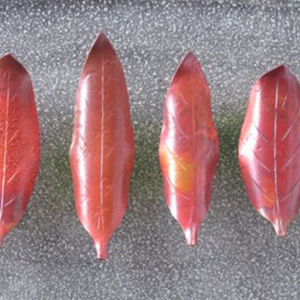 """木の葉のはしおきづくり<FONT color=""""#ea5404""""><秋のものづくりワークショップ></FONT>"""