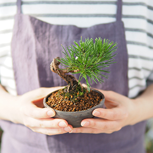 小さな盆栽づくり#9